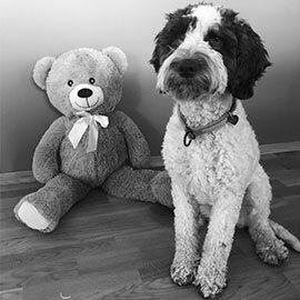 Billie-the-Dog